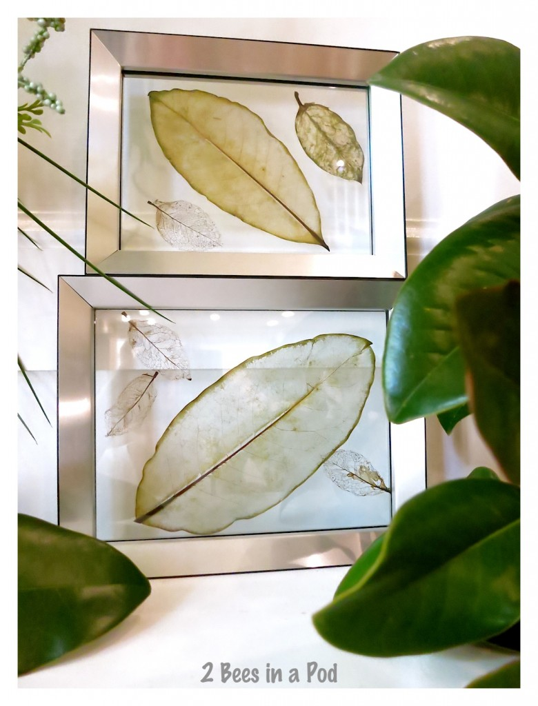 The skeleton of the leaf really stands out in this display. How to make skeleton leaves.
