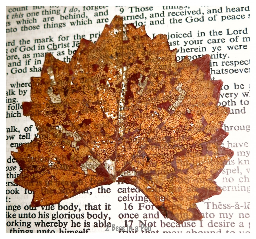 This leaf and its wonderful memory have been in my Bible for over 40 years