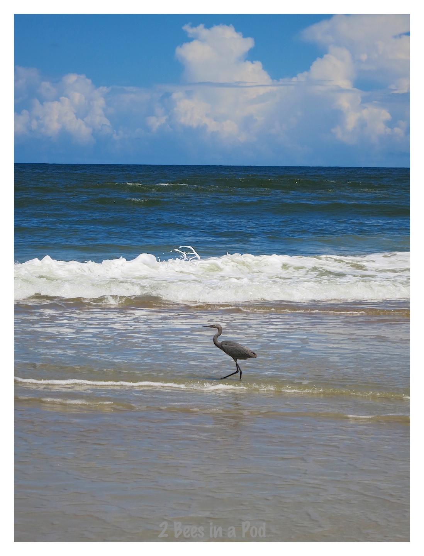 Crane walking along the beach shore at Crescent Beach, Florida