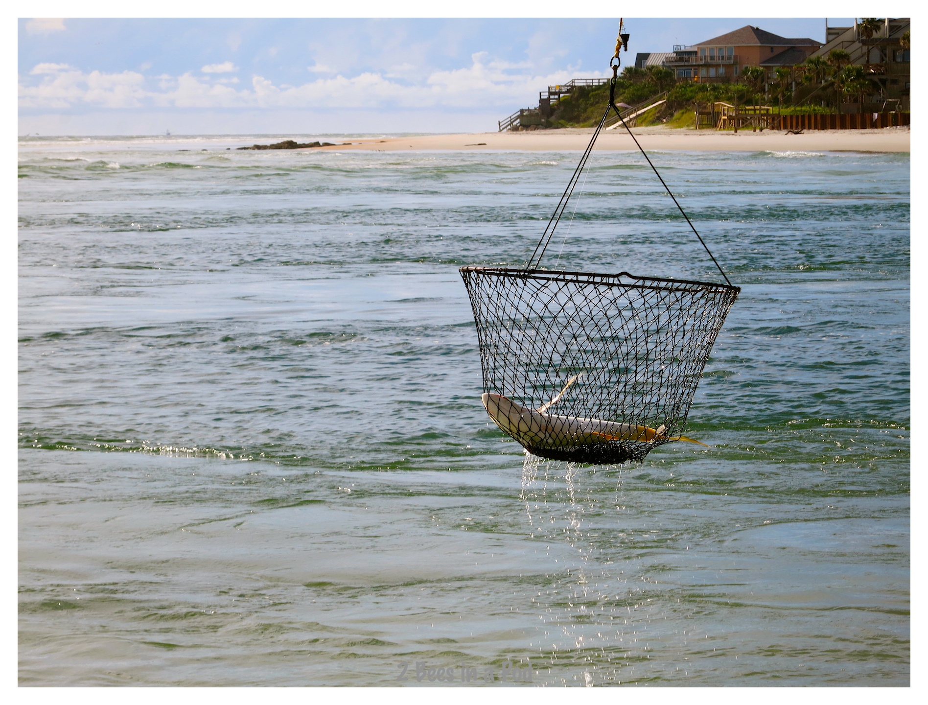 Fisherman putting his fresh caught fish into a basket to bring him in @ Crescent Beach, Florida