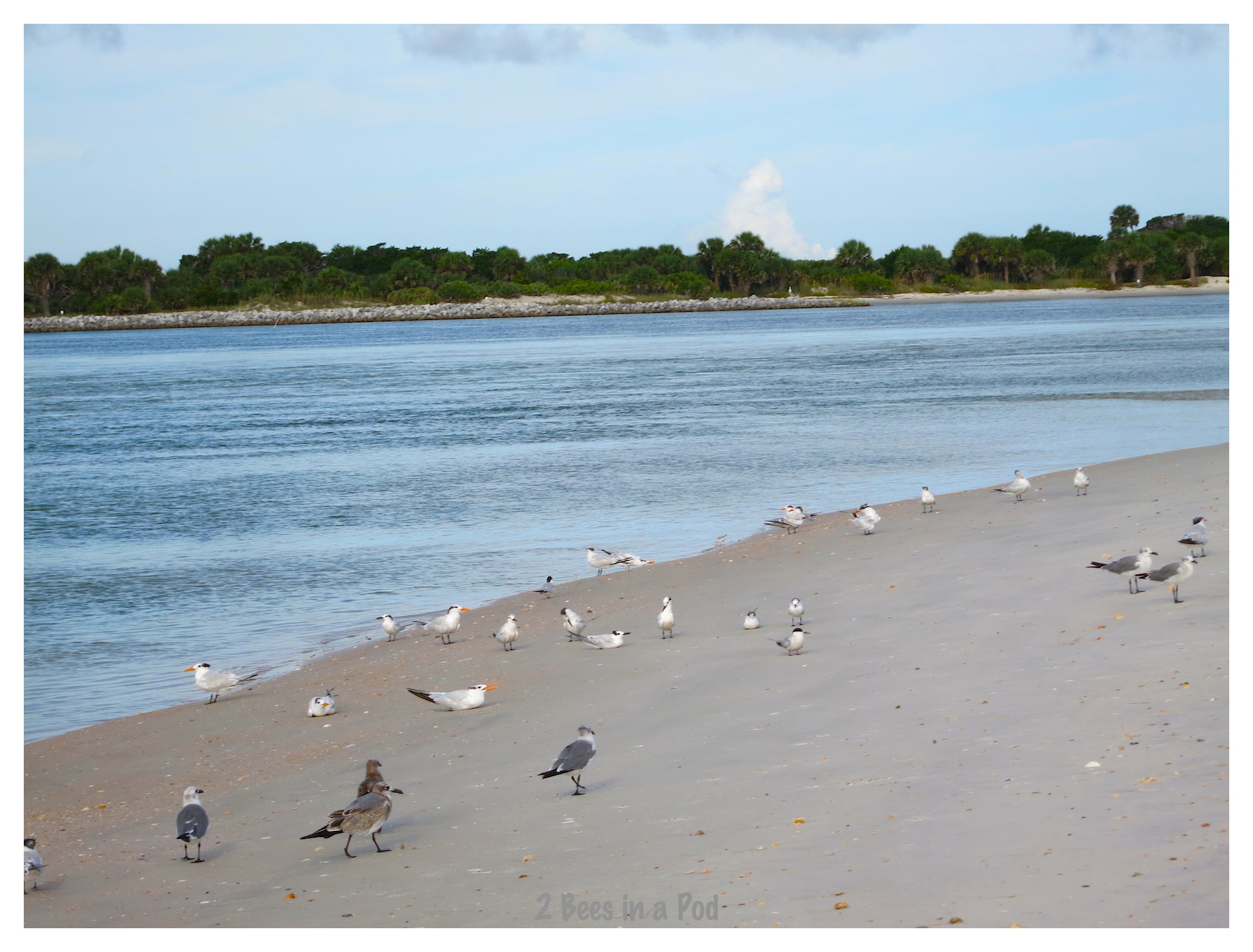 Sunbathing seagulls at Crescent Beach, Florida