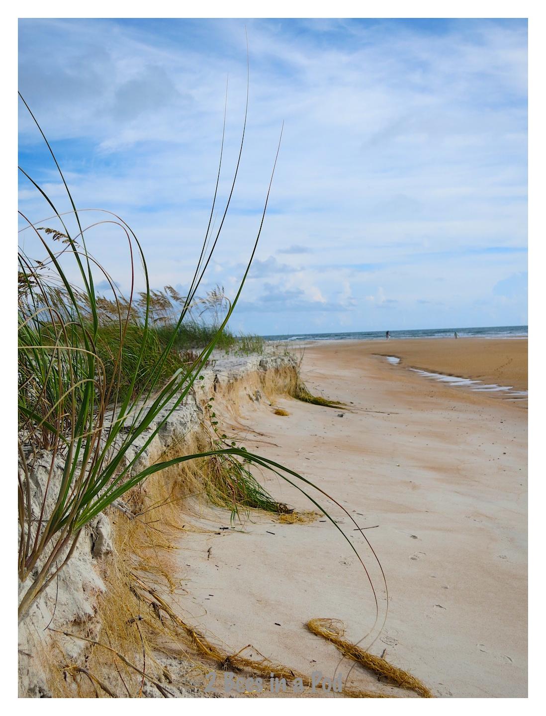 Beautiful dunes at Crescent Beach, Florida