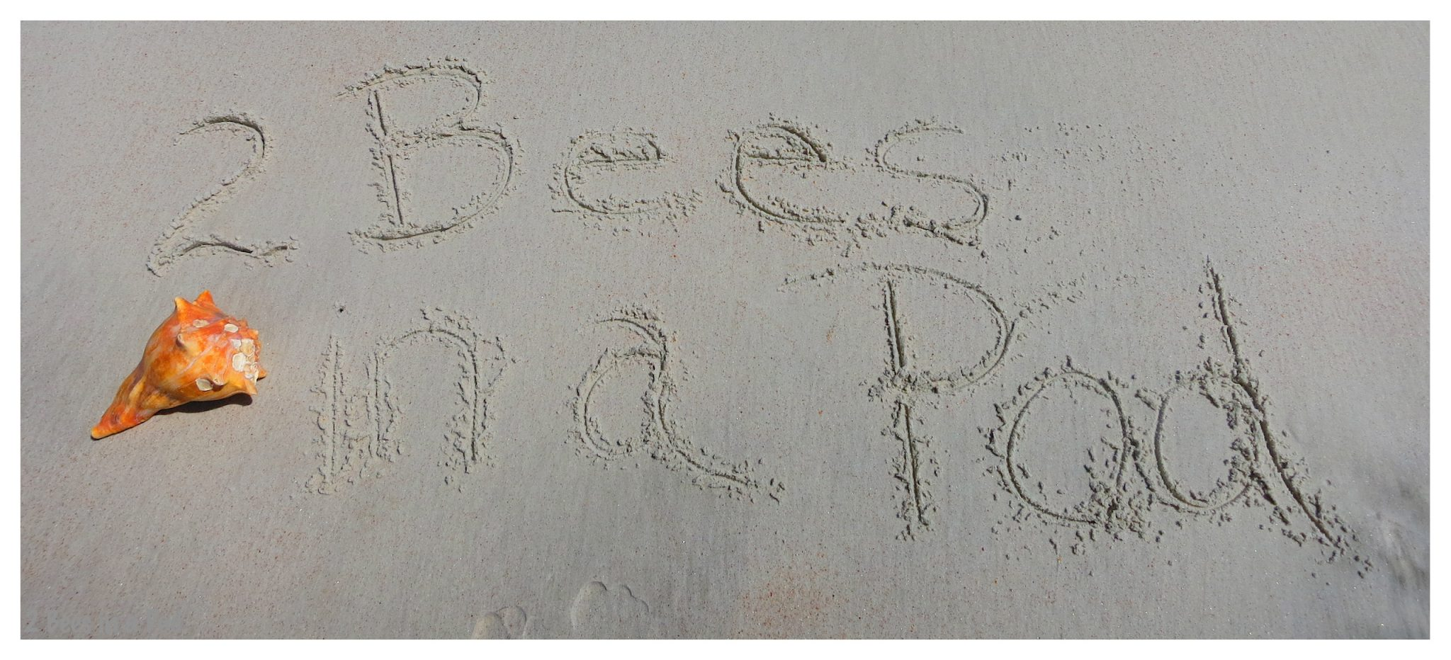 @ Bees in a Pod - spending a week at the together in Crescent Beach, Florida