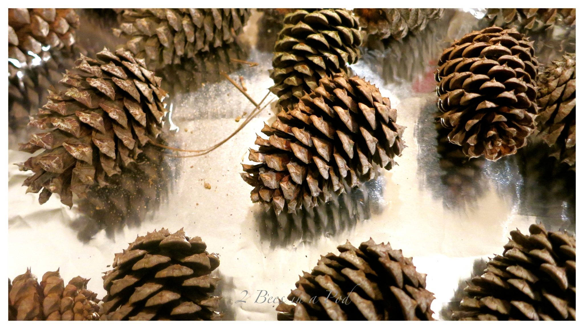 DIY fragrant pine cone fire starters...