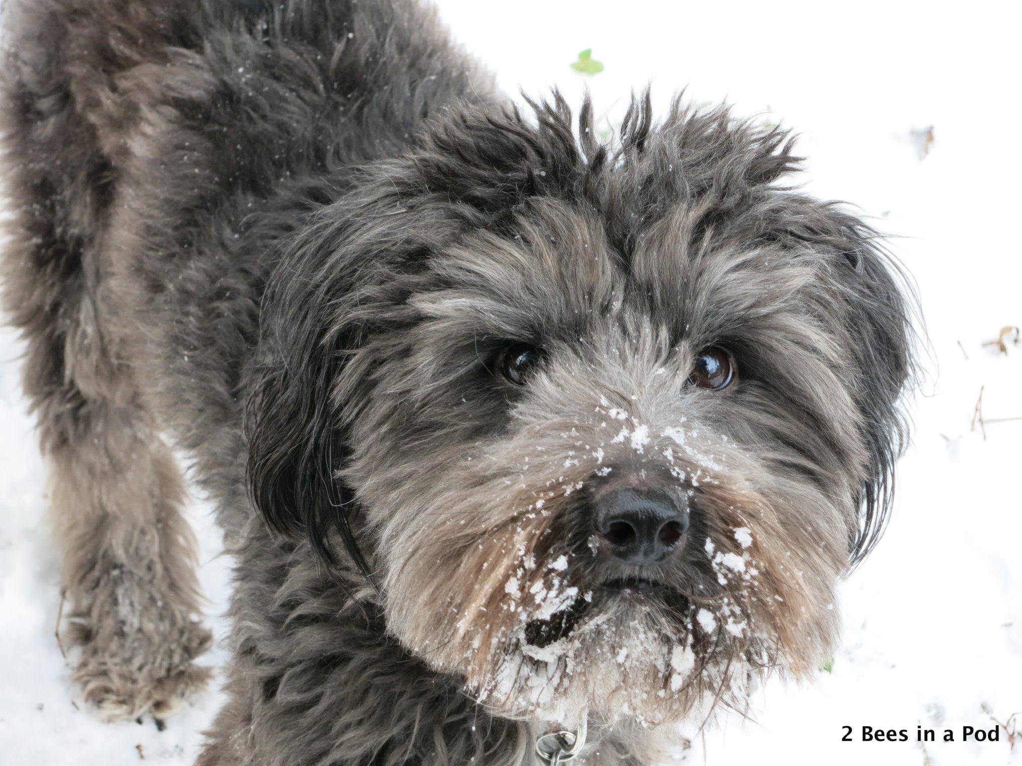 Adorable Dog in the Snow