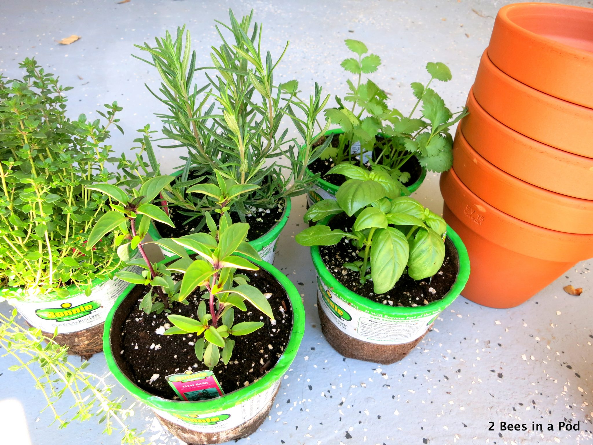 herbs & terracotta #springtime #gardening