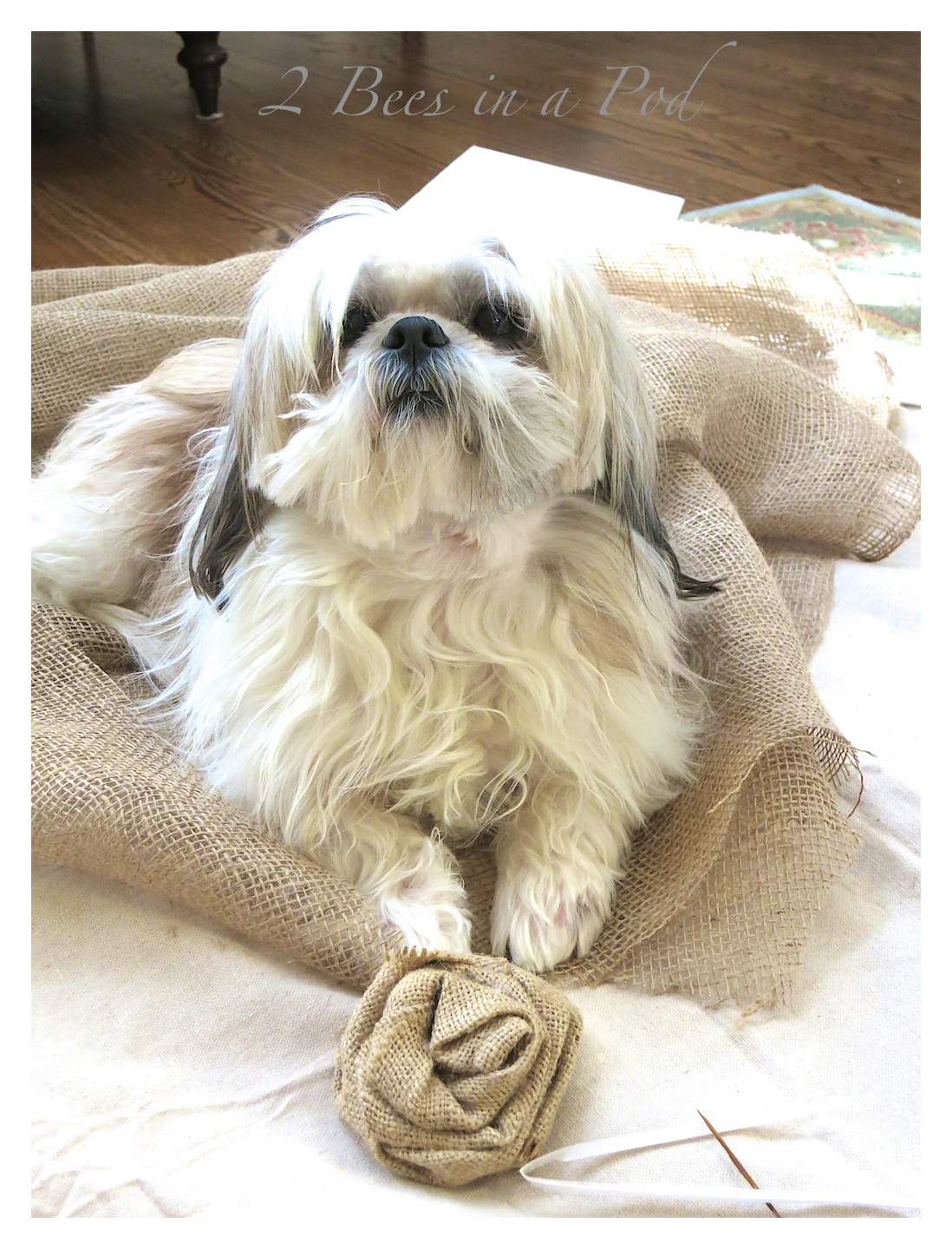 Sometimes my very cute shis tzu Starbuck likes to be in on the arts and crafts :) DIY burlap bulletin board. Made from a salvaged antique frame, burlap, foam board and batting. Cute decorated with vintage decor.