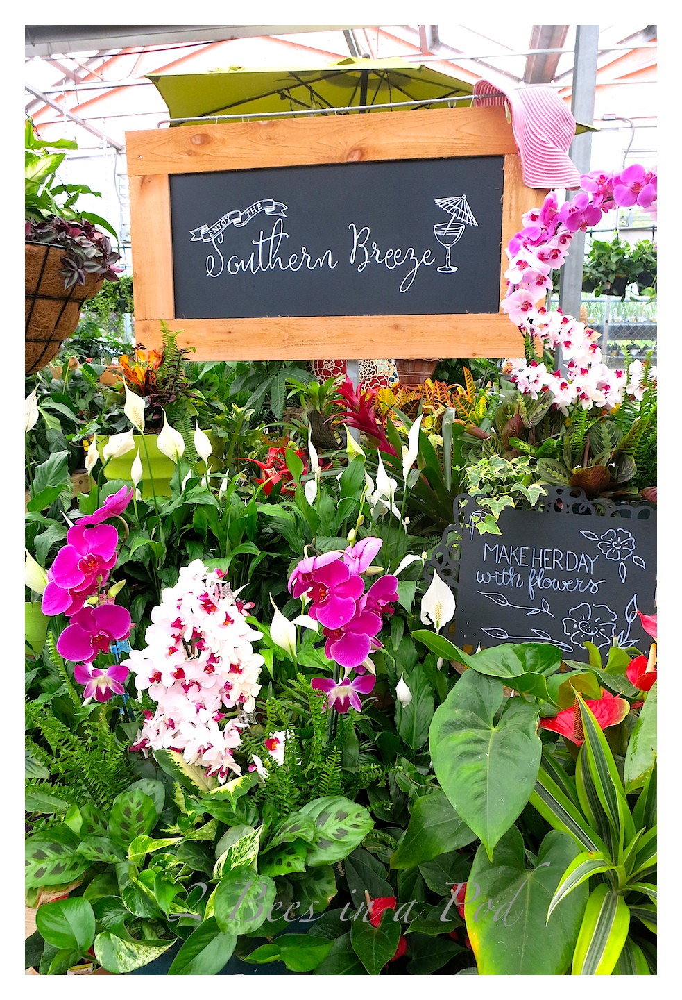Southern Living Plant Collection : Southern Living Plant Collection and Home Depot... - 2 ...