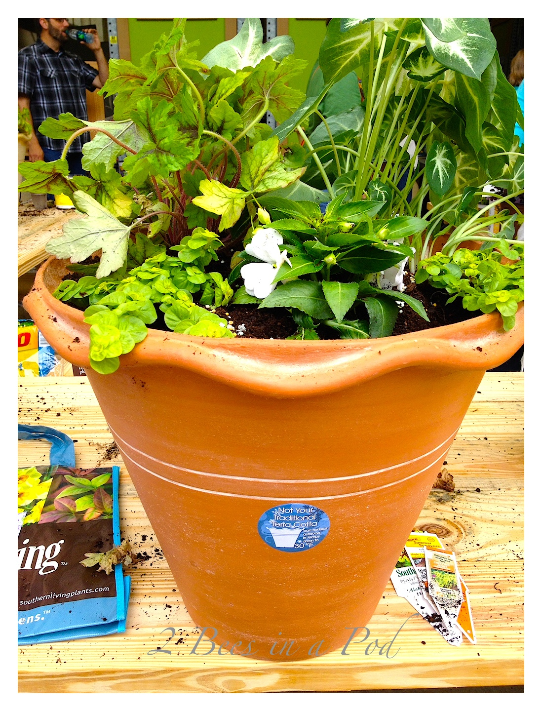 Southern Living Plant Collection and Home Depot