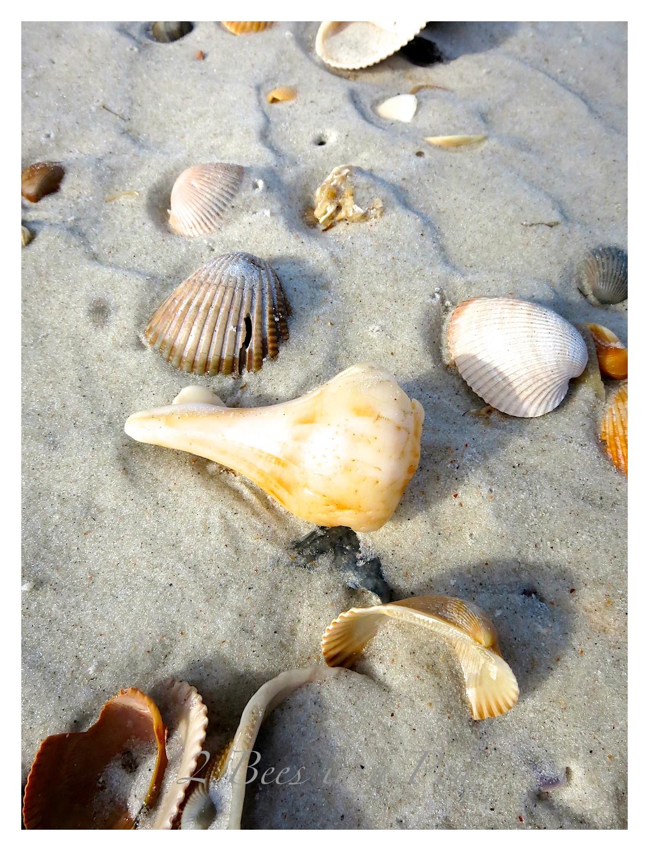 DIY Nautical Seashell Tablescape Napkin Rings...easy  seashell beach craft.