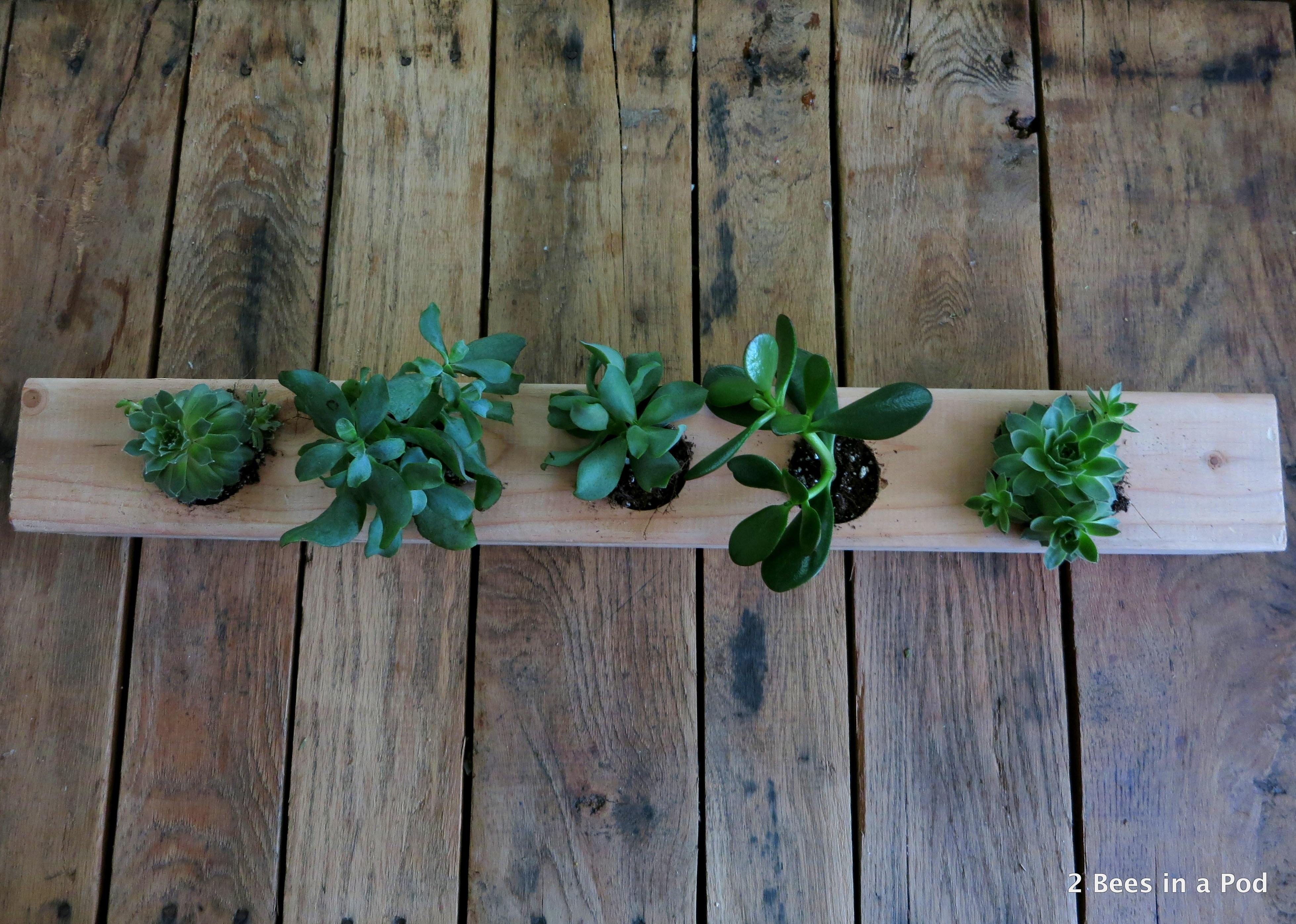 Succulents in DIY planter