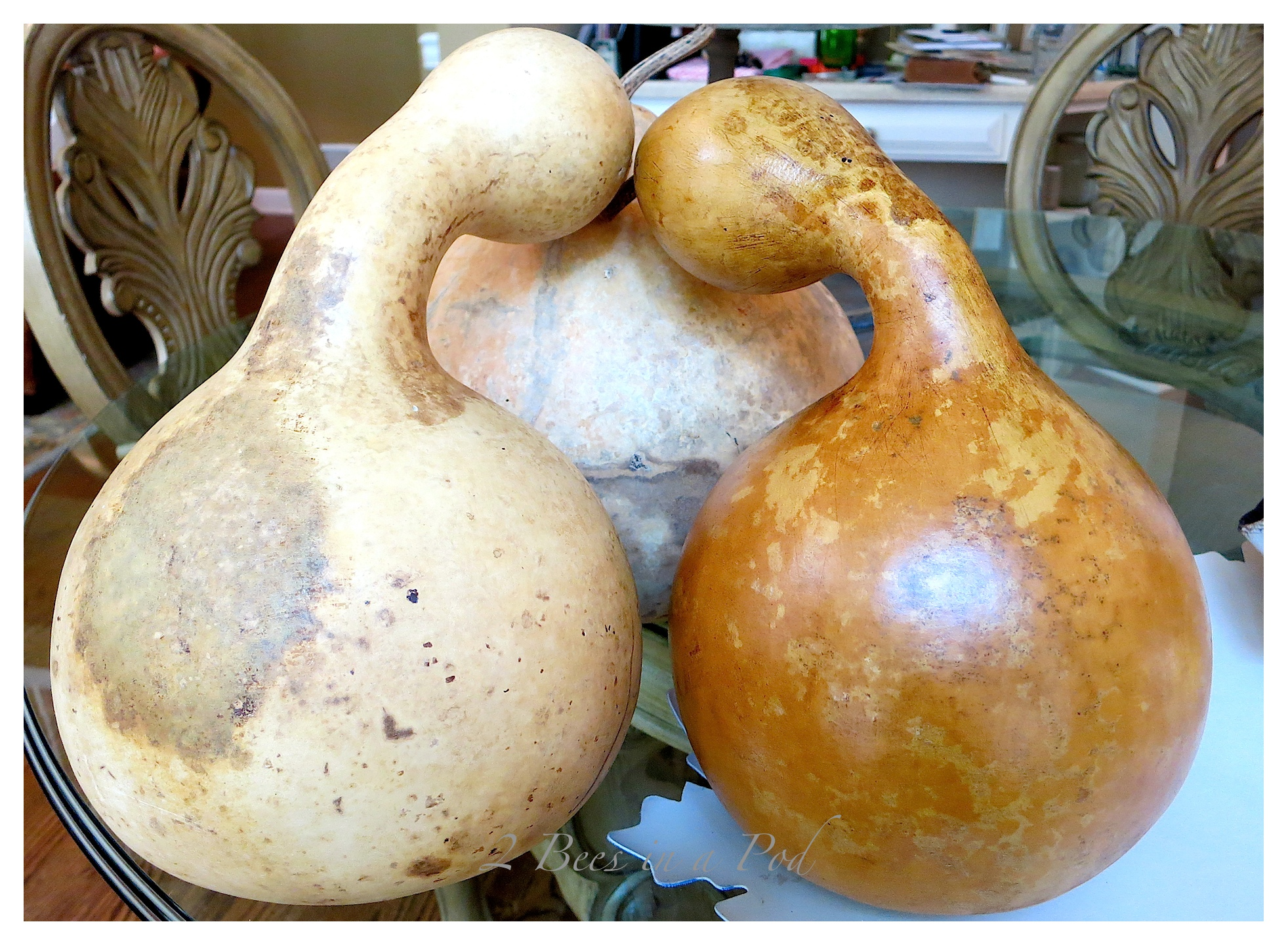 Using the stain makes a huge difference on the gourds. Such an easy DIY project for Fall.