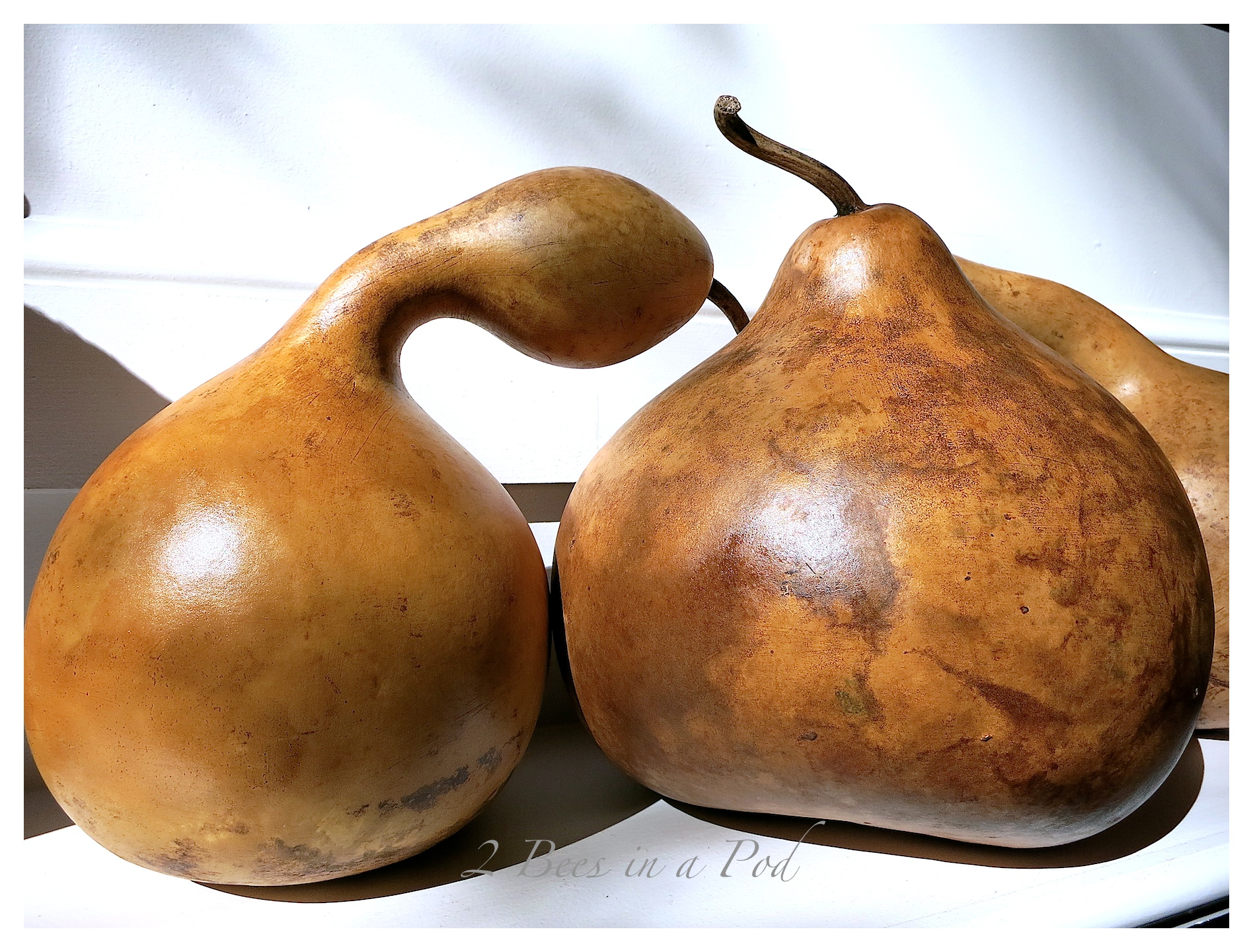 These stained gourds are perfect Fall decor. The stain gives them so much more character.
