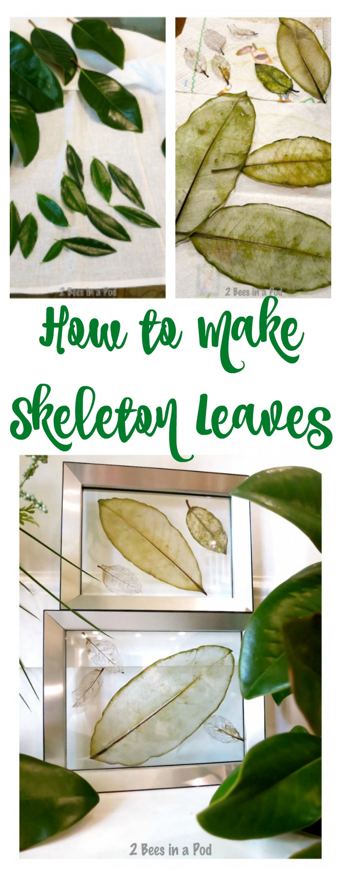 How to make skeleton leaves. Easy DIY Fall craft.