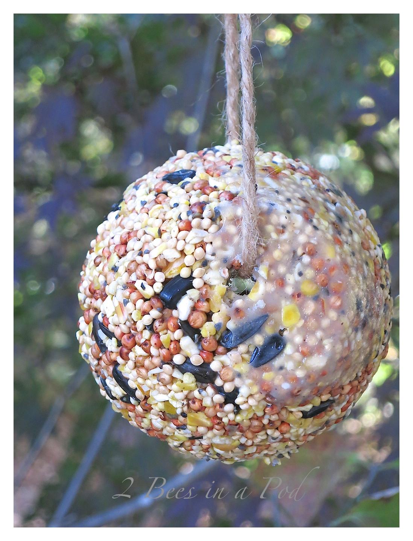 DIY Birdseed Cakes... - 2 Bees in a Pod