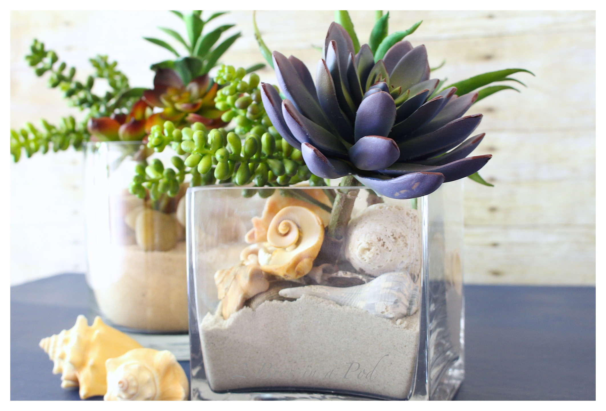 Coastal Inspired Succulent Garden - beach sand, shells, rock, succulents