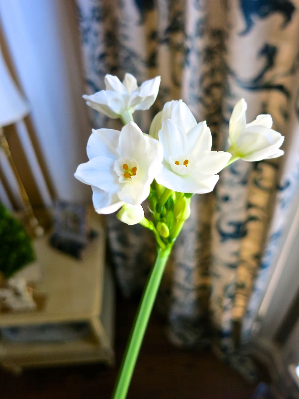 Growing Paperwhites in time for the holidays. These pretty delicate flowers are so easy to grow. You can get creative with your growing containers too!