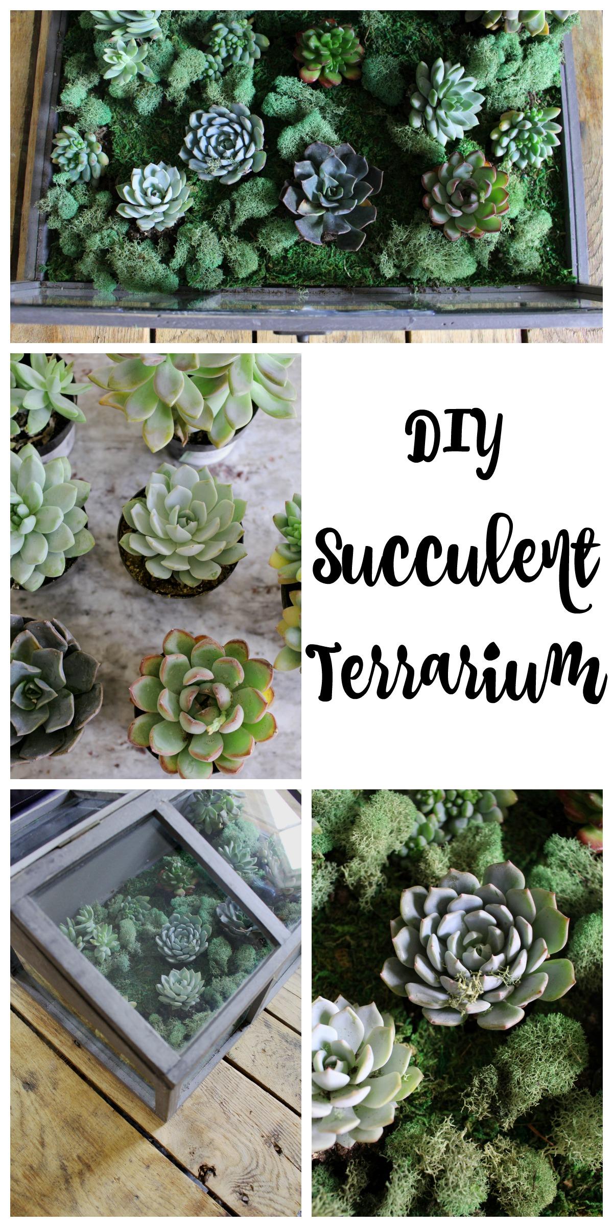 Diy Succulent Terrarium 2 Bees In A Pod
