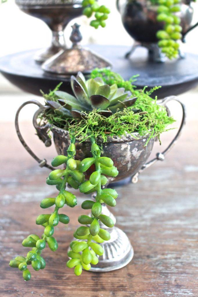 Succulents in Vintage Silver Sugar Bowls