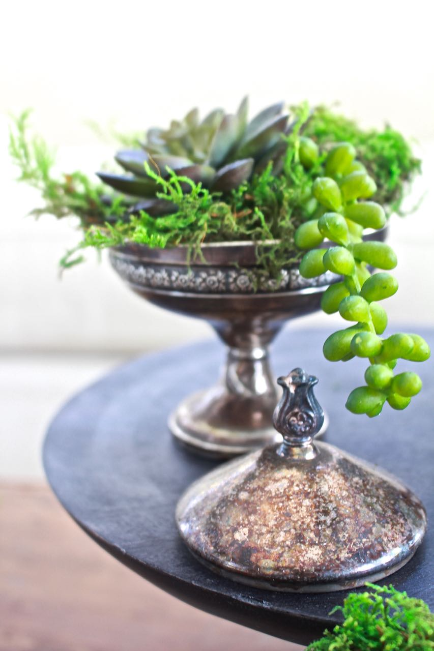 Succulents In Vintage Silver Sugar Bowls 2 Bees In A Pod