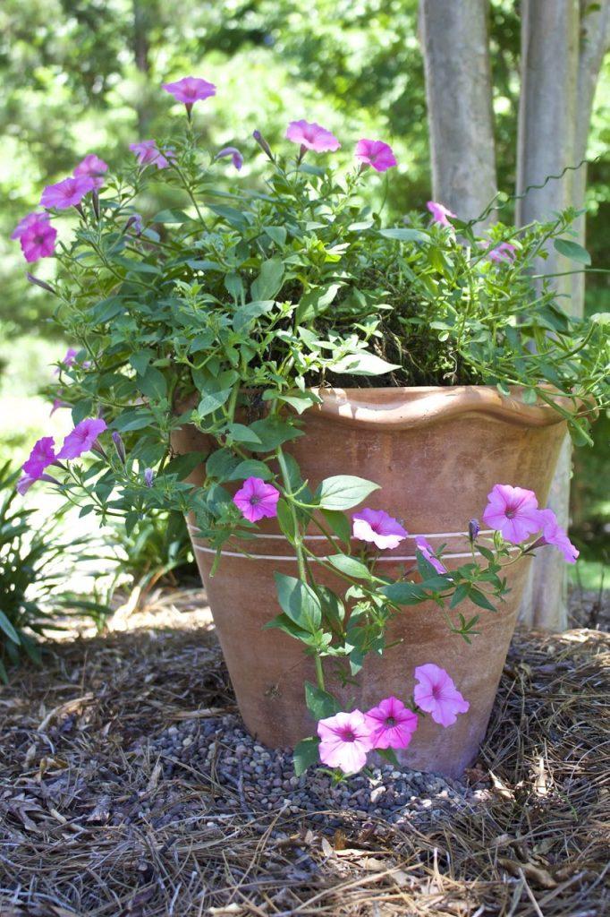 Summer garden and porch tour. Beautiful garden petunias.