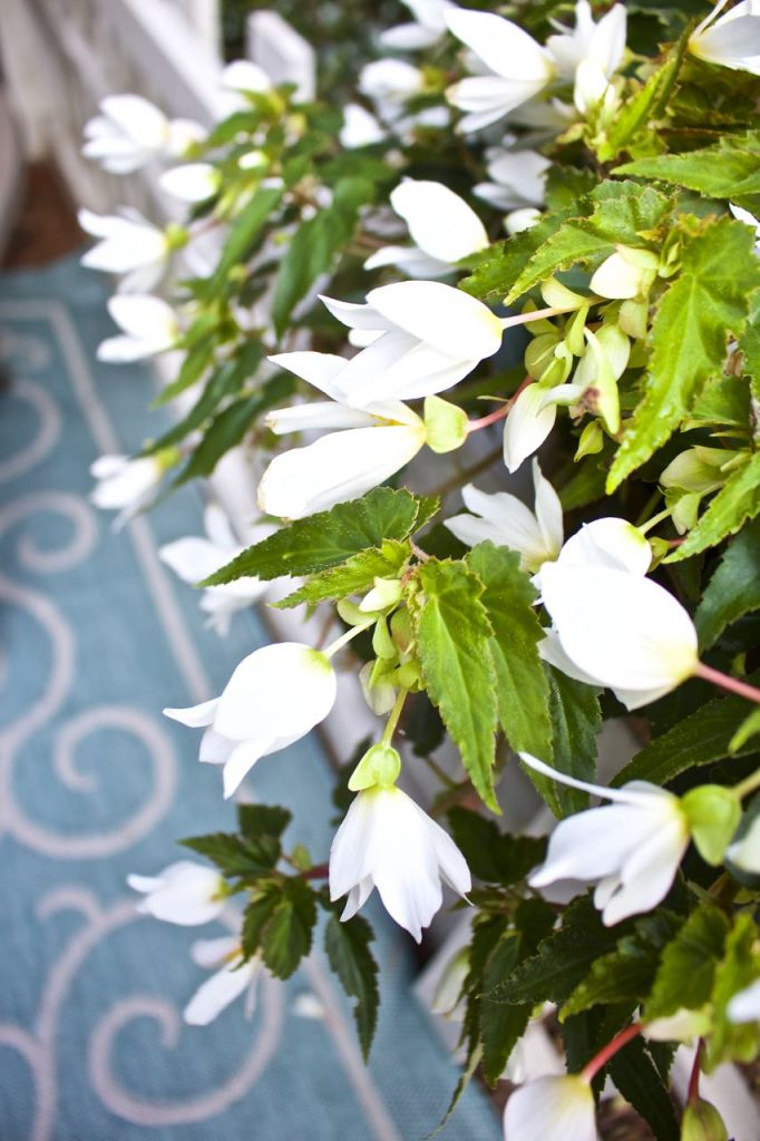 Summer garden and porch tour. Hanging begonias.