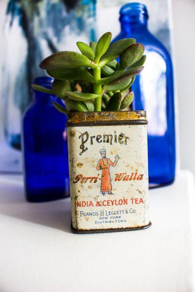 Succulent Planter Ideas – Vintage Tea Tin
