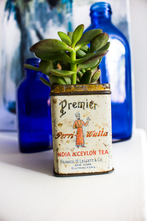 A vintage tea tin is a perfect planter. Succulent planter ideas