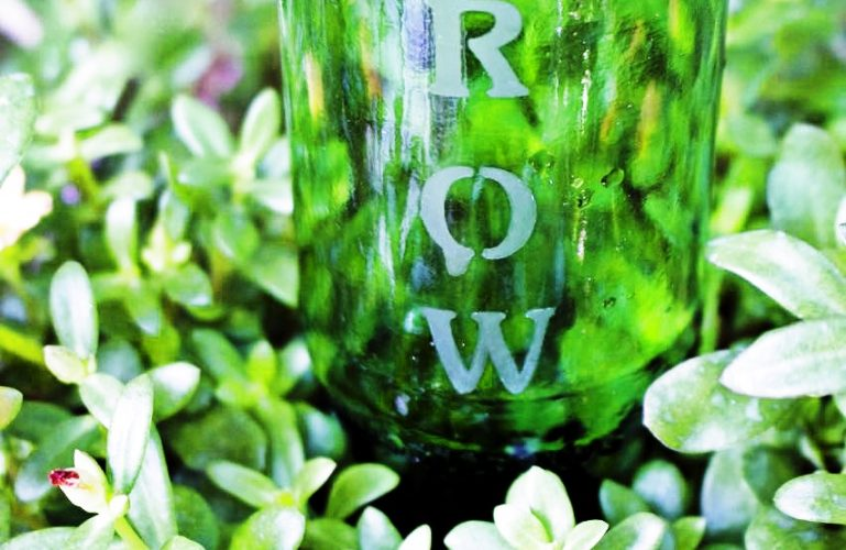 DIY garden ideas. Etched bottles become self watering garden bottles.