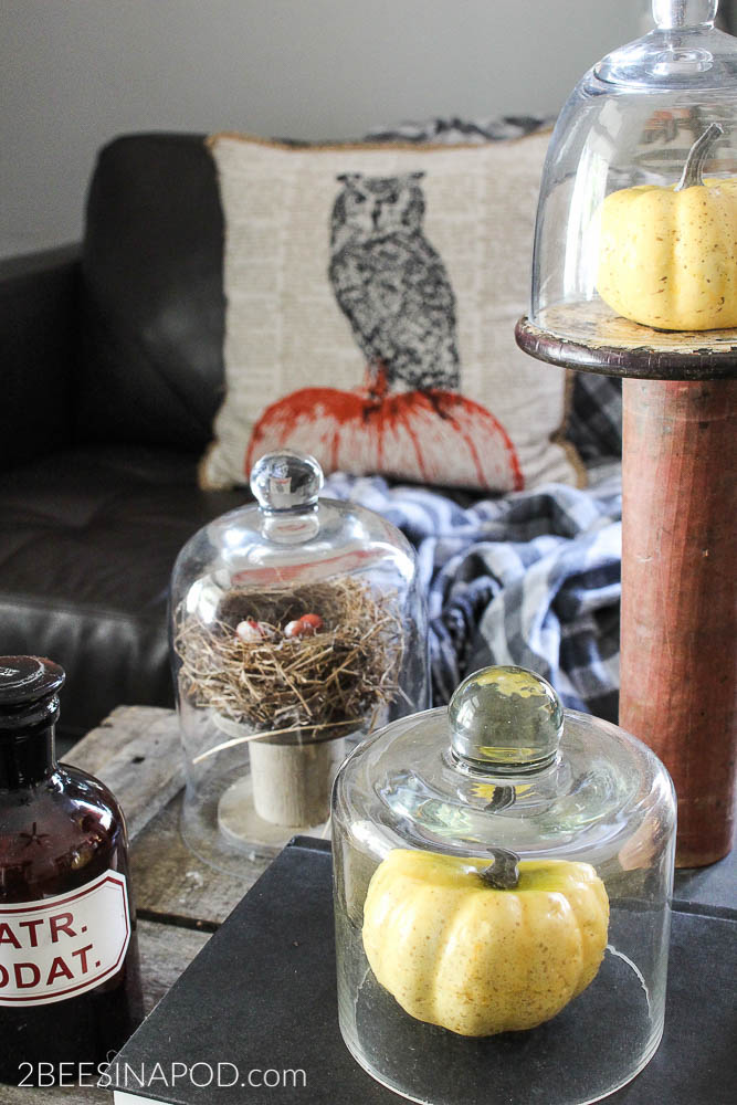 Fall vignette with cloches