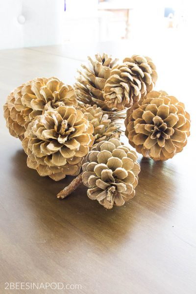 How to Bleach Pinecones. Bleached pinecones look like blonde wood.