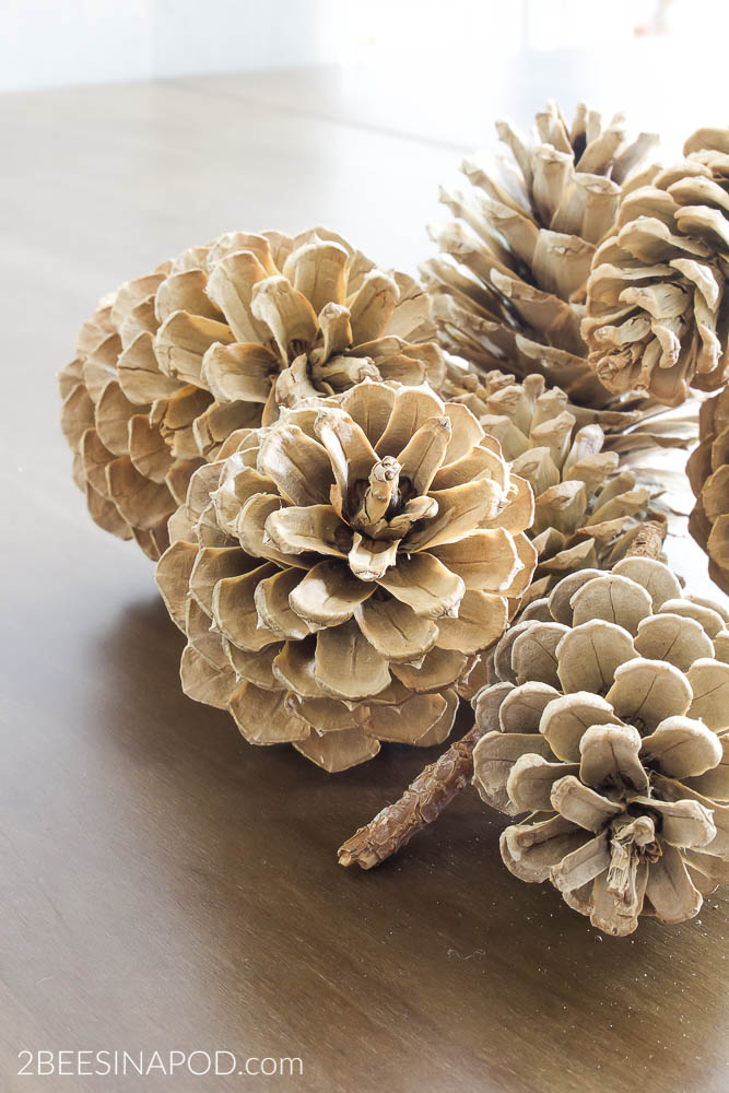 How to Bleach Pinecones. Bleached pinecones are easy to make.