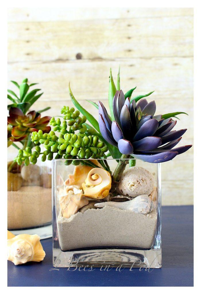 Seashells add to succulent garden