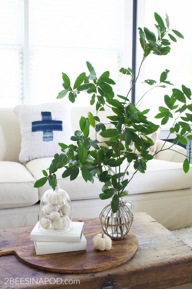 What Can You Put Under a Cloche - fall decor such as mini pumpkins