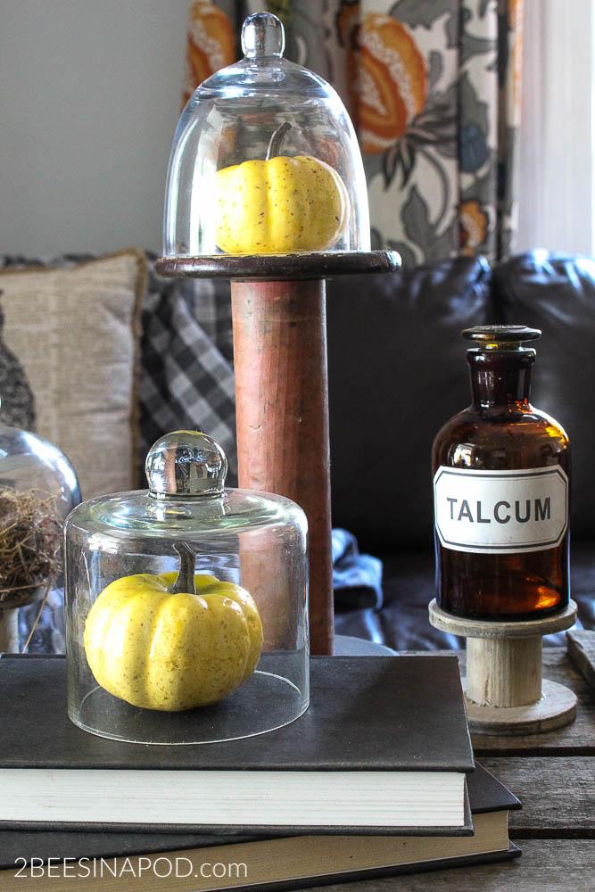 What Can You Put Under a Cloche - mini pumpkins or gourds