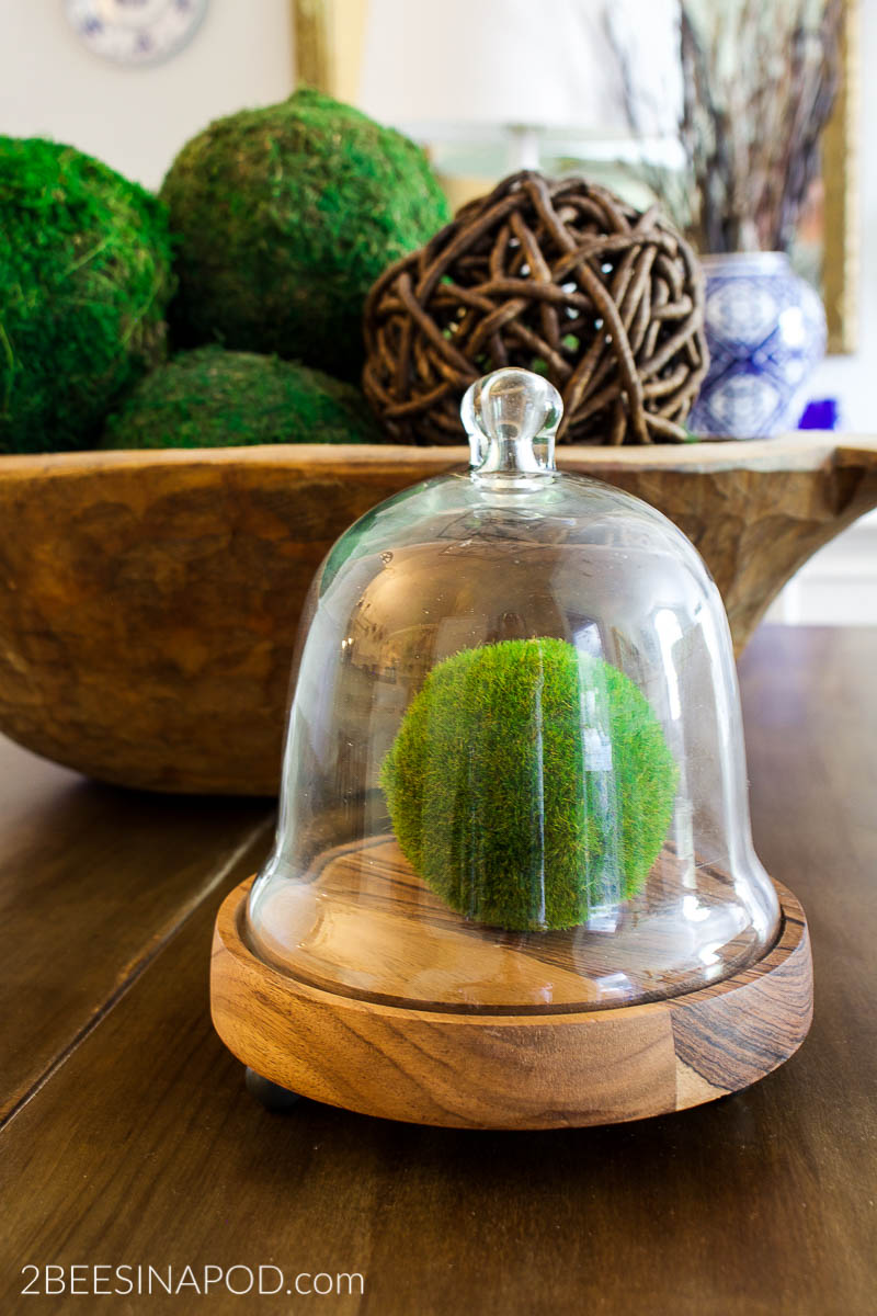 What Can You Put Under a Cloche - moss ball