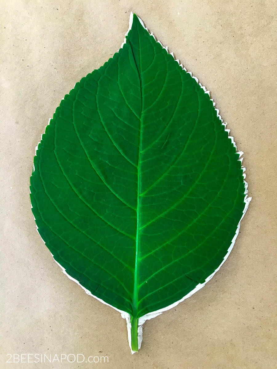 Trmming the clay leaf with sharp scissors makes the leaf more authentic.