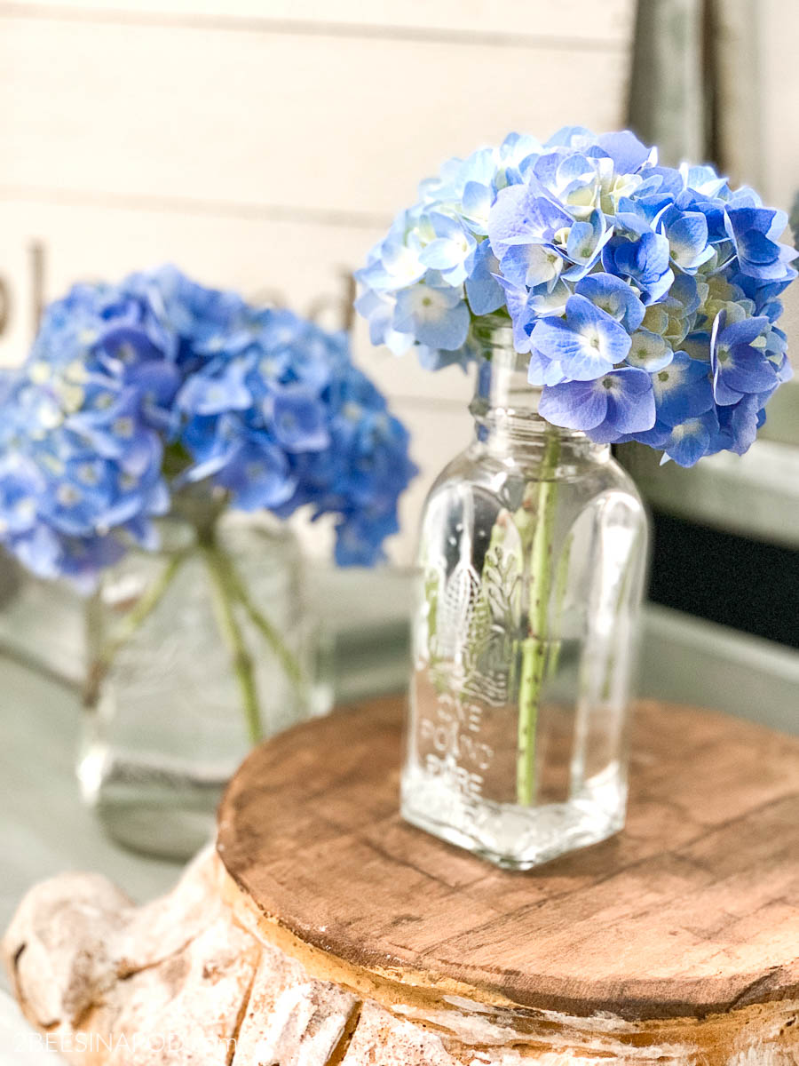 Simple Tips for Growing Hydrangeas ~ In The South