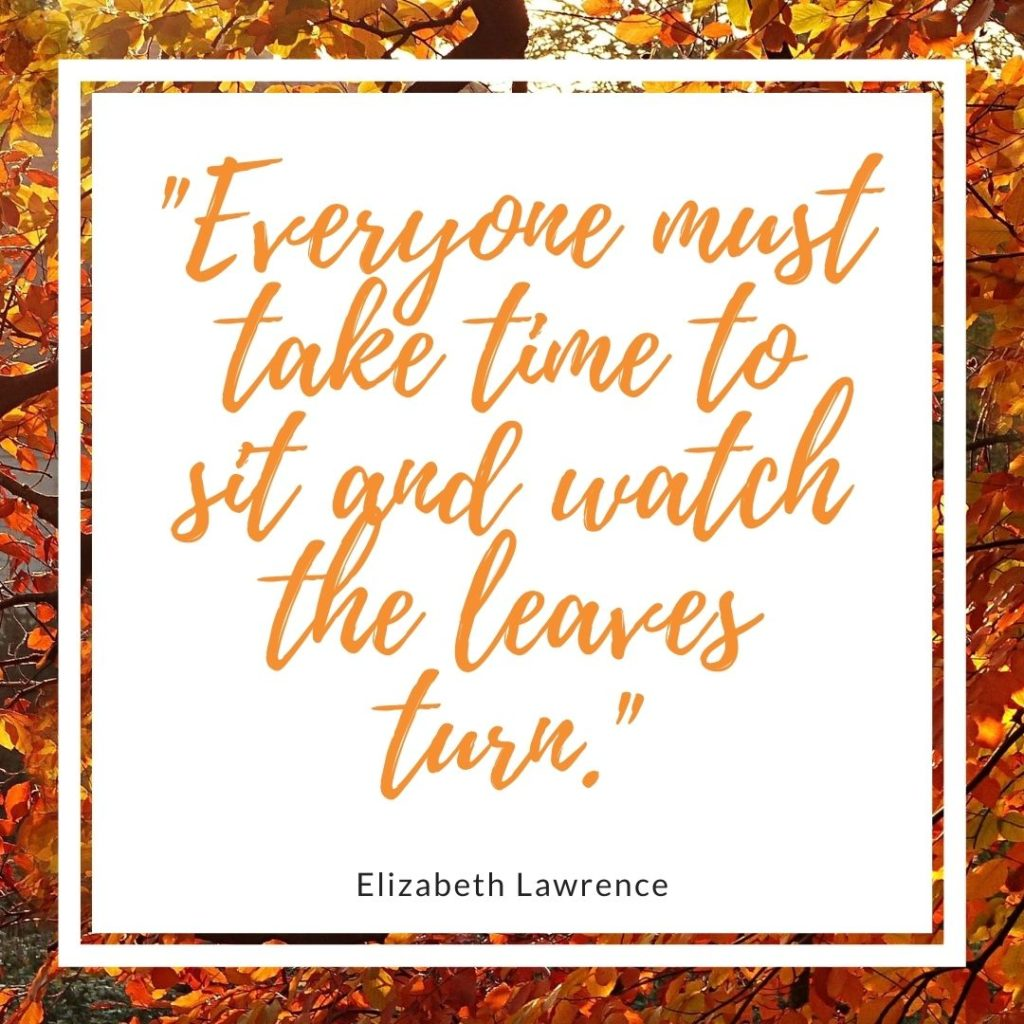 Everyone must take time to sit and watch the leaves turn - quote