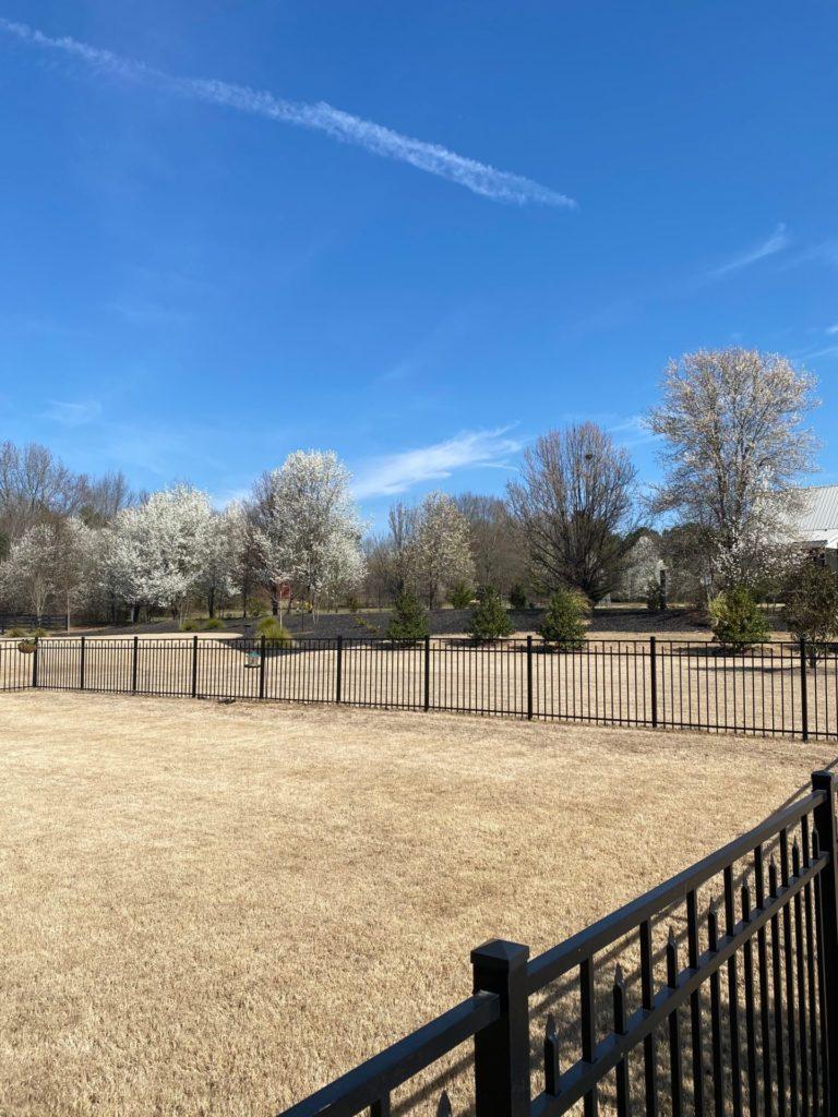 Large fenced in backyard