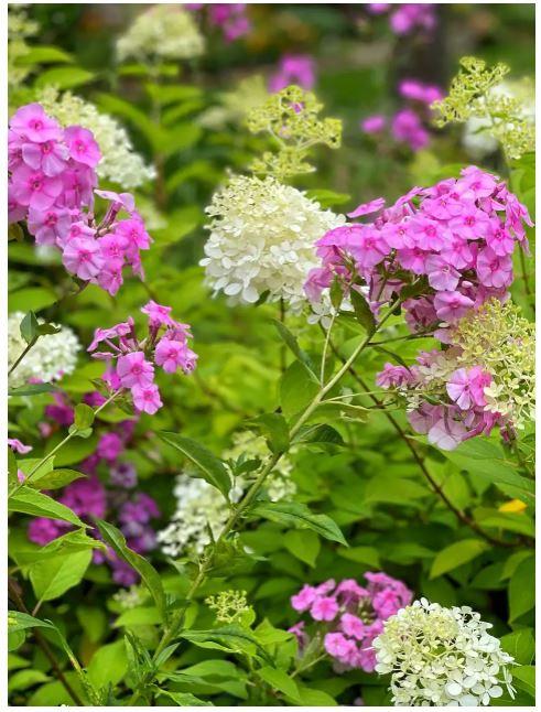 All the Buzz - Stunning Garden